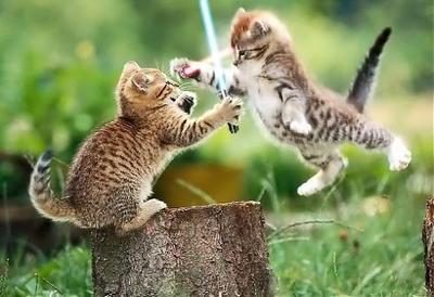 Kittens-KittensFightingUsingLightSa