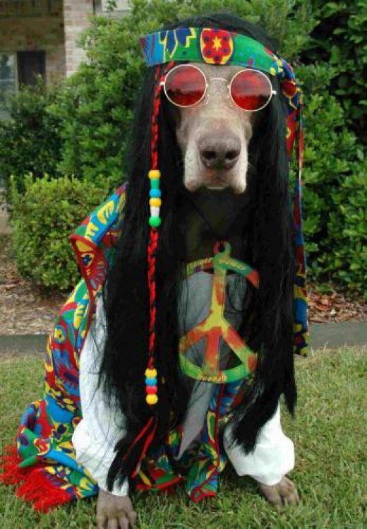 cool-dog-funny-hippie-love-Favim.com-265596