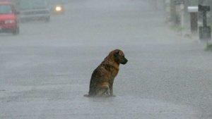 Sad_rain_dog.jpg